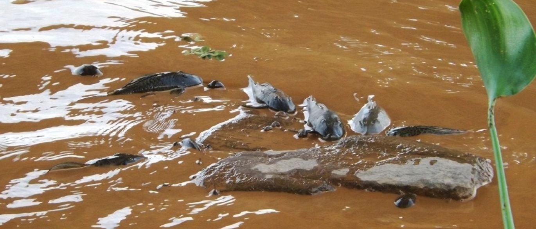 peixes-mortos-rio-doce