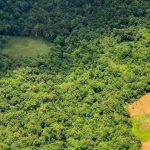 Brasil perdeu 89 milhões de hectares de vegetação natural nos últimos 34 anos