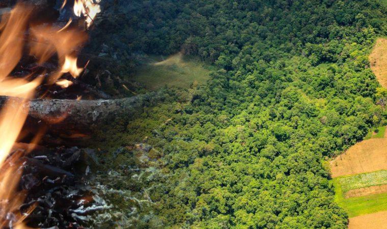 Queimadas na Amazônia em 2019 seguem o rastro do desmatamento